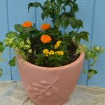 vegetables herbs and flowers in pot in West Seneca
