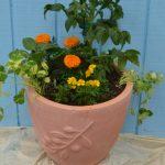 vegetables herbs and flowers in pot in West Seneca