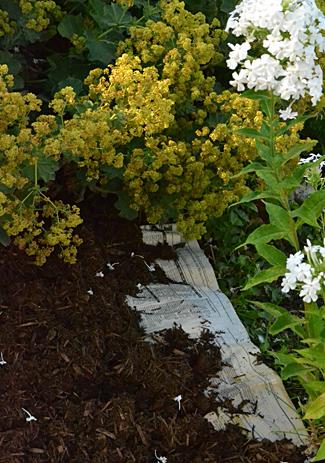 compost around perennials
