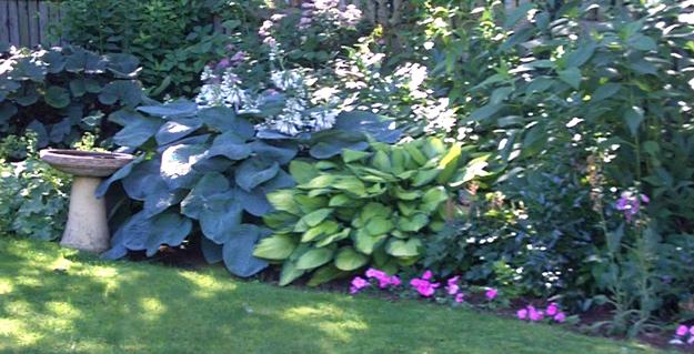 organic garden in Cambria NY
