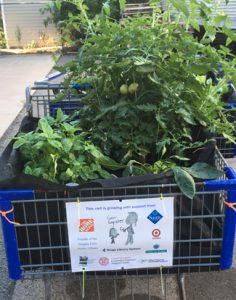 tomato plants grown in shopping cart