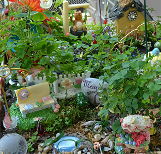 closeup of fairy garden in Buffalo NY