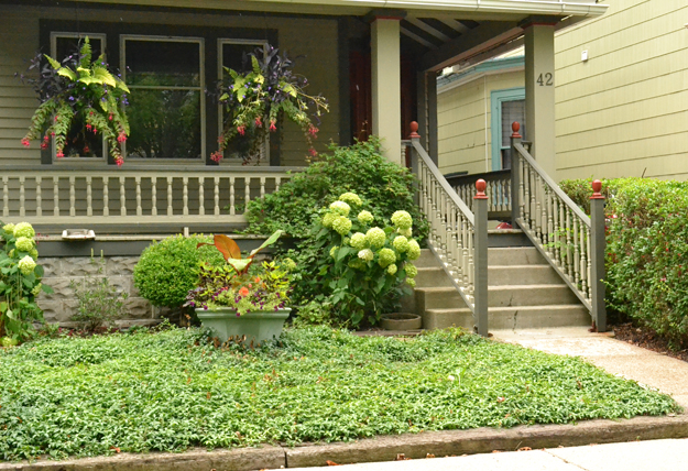 Groundcovers Are Important In Grassless Front Backyards