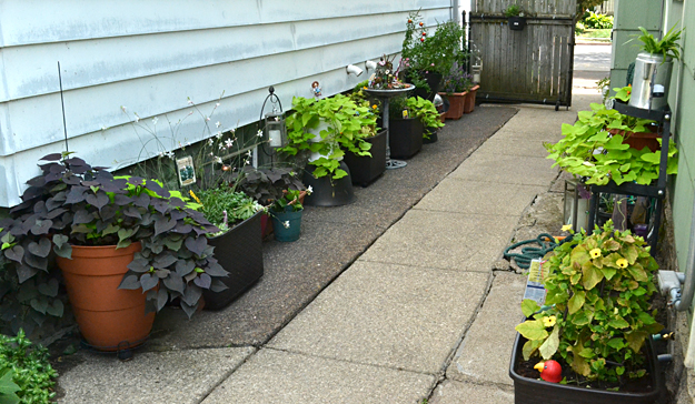 pots of plants along driveway in Riverside in Buffalo NY