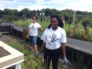 volunteers on green roof at Springville Center for the Arts
