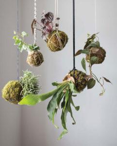 kokedama moss ball garden