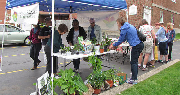 plant and seed exchange