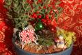 Christmas mini garden