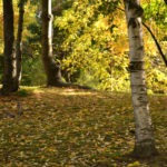 autumn leaves on ground in Glen Park
