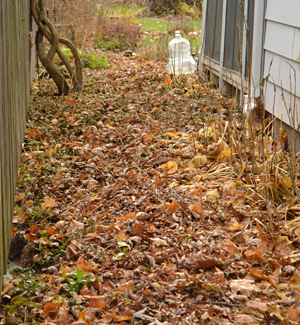 path created using autumn leaves