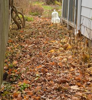 path created using autumn leaves