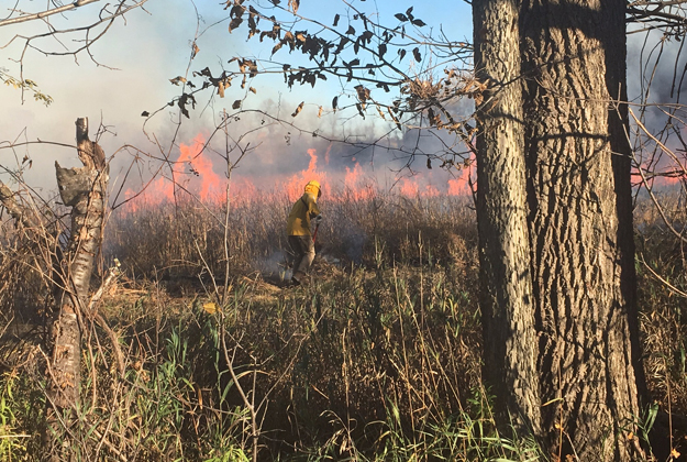 In what is called a prescribed burn, a grassland in the Niagara Escarpment Preserve was set on fire to keep the area healthy. The benefits include preventing the invasion of shrubs and trees and clearing out invasive plants and insects. Photo courtesy Western New York Land Conservancy