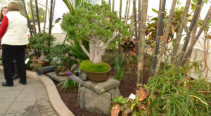 bonsai display at Buffalo and Erie County Botanical Gardens