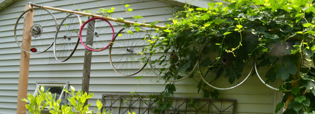 bike wheels used as trellis