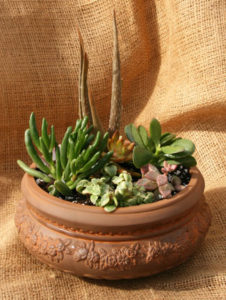 succulent container from Mischler's in Williamsville