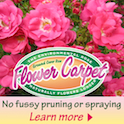 Anthony Tesselaar Plants Flower Carpet ad