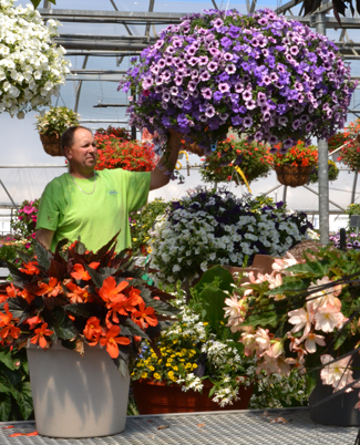 containers of annuals at Waterman's in East Concord NY