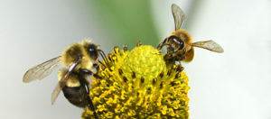 two bees facing each other on flower by Stofko