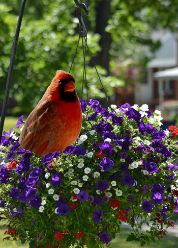 bird in hanging basket