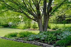 garden beds in Springville, New York