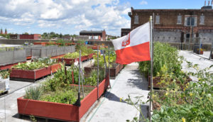 rooftop gardens at Broadway Market in Buffalo