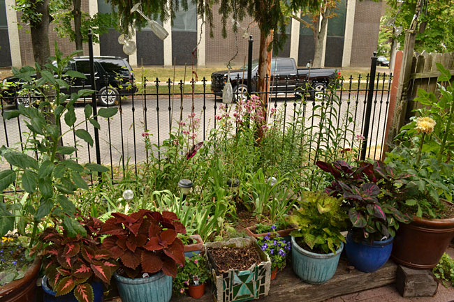 Buffalo Garden Walk: Tip On Planting In Tiny Yard; Get More Tips At Garden Walk