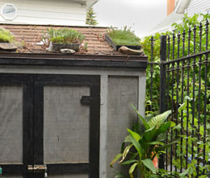containers of plants on roof of shed
