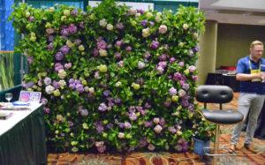 wall of hydrangeas
