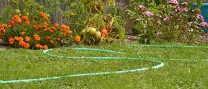 hose in autumn garden