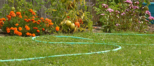 hose in autumn garden