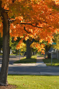 tree with orange leaves on street in autumn