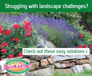 Tesselaar ad landscape challenges