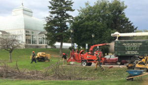 cutting trees at Buffalo and Erie County Botanical Gardens