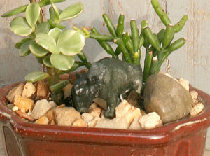 Lil' Buffalo in miniature garden