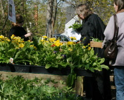 shoppers at Mischler's perennial sale