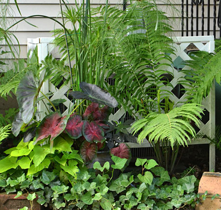 air conditioner hidden by plants