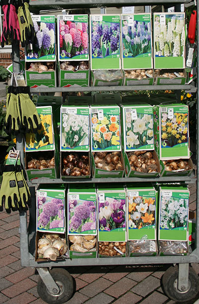 display of bulb at Mischler's Florist and Greenhouses
