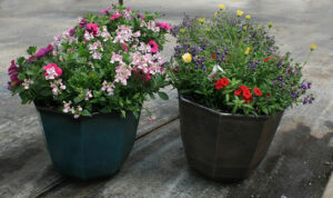 octagon planters at Mischler's in Williamsville
