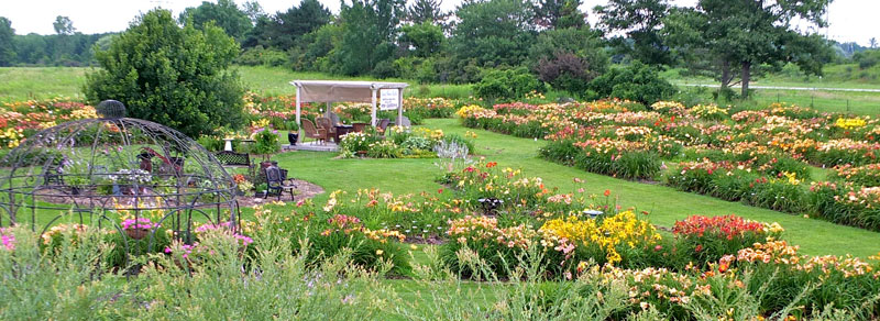 seating areas at Lasting Dreams Daylilies in Orchard Park
