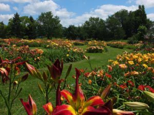 paths through gardens at Lasting Dreams Daylilies