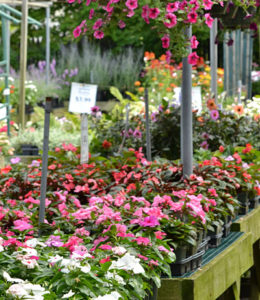 plants at Mischler's in Williamsville NY