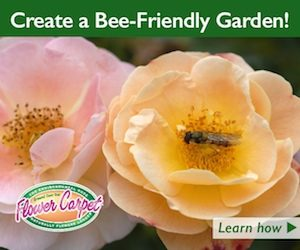 bee friendly ad for Anthony Tesselaar