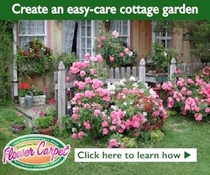 cottage garden ad for Anthony Tesselaar