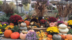 autumn display at Lockwood's in Hamburg