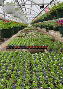 view of greenhouse at Bengert's