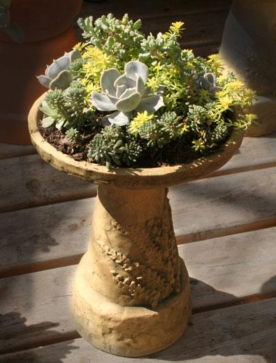 Succulents in a mini-bird-bath from Mischler's