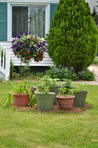 grouping of containers with vegetables on front lawn