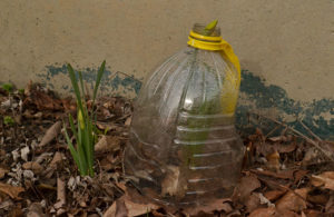plastic bottle protecting sprout