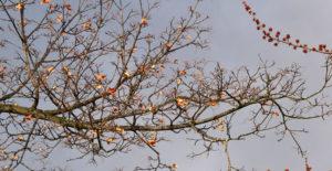 tree still has leaves in spring