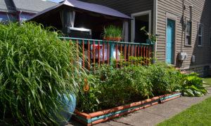 vegetable garden along back deck on Garden Walk Buffalo